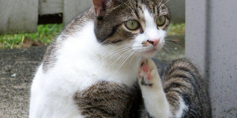 Comment trouver un vétérinaire pour son chat ?