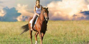 Les bienfaits de l'équitation