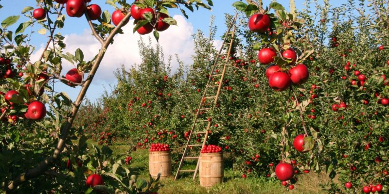 Pourquoi acheter ses fruits et légumes à la ferme ?
